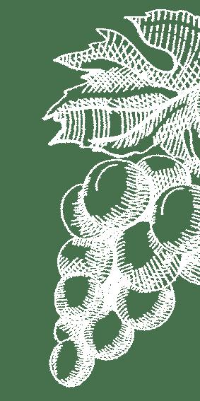 grappes de raisin blanches