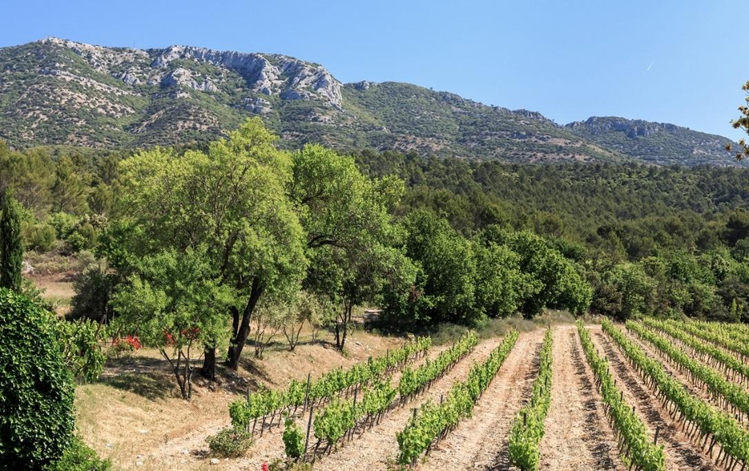 Vins traditionnels provençaux