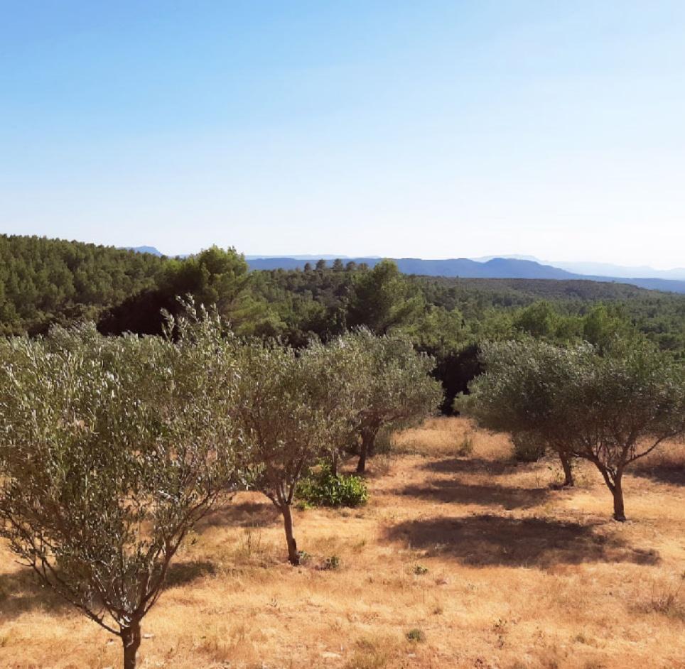 Huile d'olive vignoble Provence