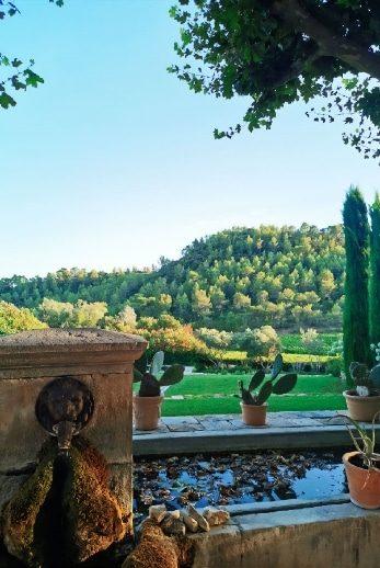 vignoble domaine Saint Andrieu
